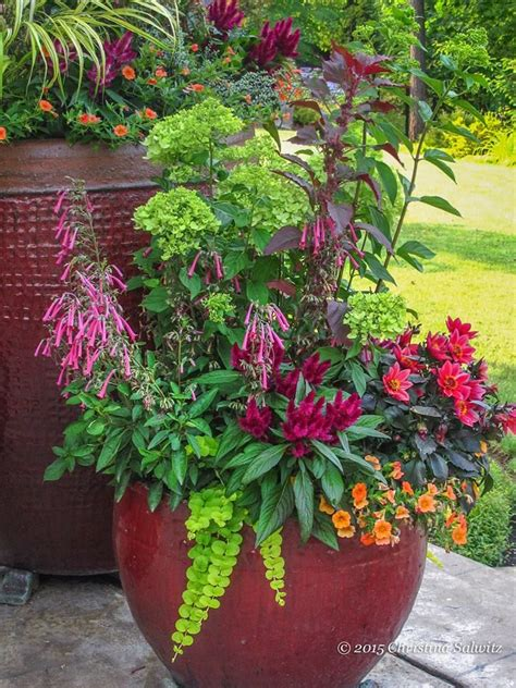 Container Flower Gardening Ideas 783 Best Images About Potted Plants On Container Plants Container Gardening And