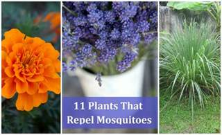 plants to keep mosquitoes away plants that will help you keep mosquitoes away diy cozy home
