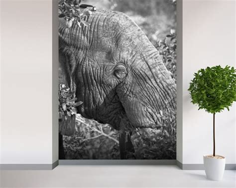 elephant wall murals elephant nick jackson wall mural wallsauce