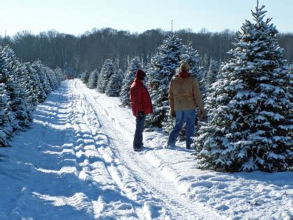 cut your own christmas tree westminster md best places to cut your own tree in the dc area 171 cbs dc