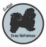 coco cabana havanese havanese breeders in florida havanese puppies for sale fl