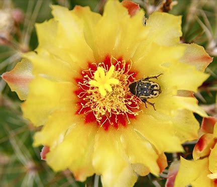nancy cavender garcia photo of the day cactus jungle