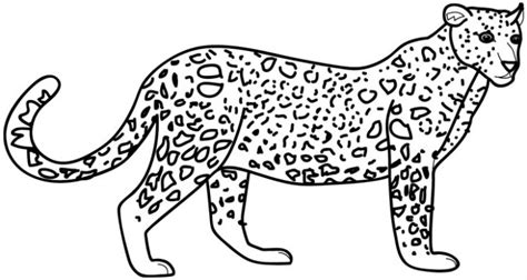 leopard color free coloring pages of a leopard