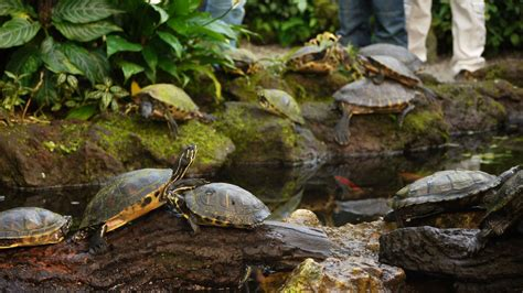 munich botanical gardens file turtles botanic garden munich jpg wikimedia commons