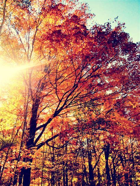 tumblr themes free autumn autumn colours tumblr