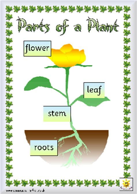 Display Book Sheet 20 Flower M0100 plants homework ks1