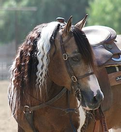 horse shoo for african american hair best 25 streaks in hair ideas on pinterest big hair