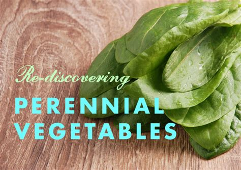 Perennial Garden Vegetables List Garden Ftempo Perennial Garden Vegetables