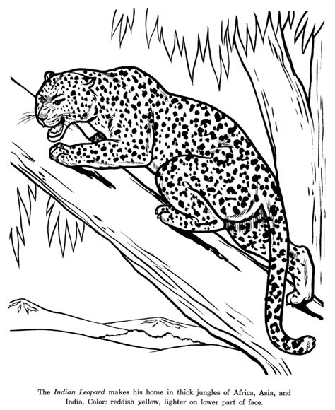 india animals coloring pages animal drawings coloring pages indian leopard animal