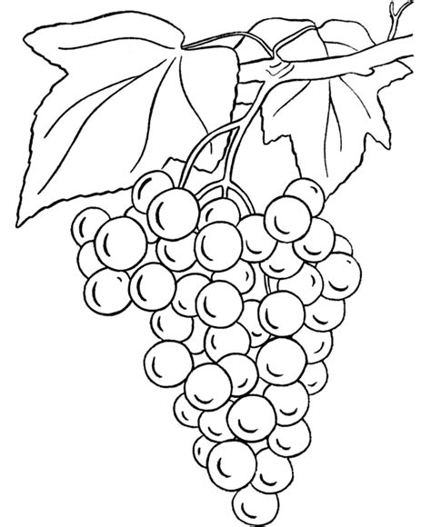 coloring pages grapes cluster of grapes coloring page bible coloring pages