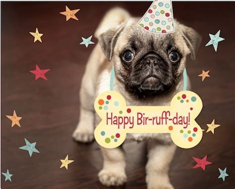 Puppy Birthday Wishes. Free Pets eCards, Greeting Cards