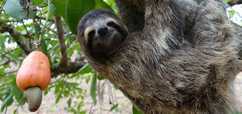 What Is A what is a sloth slothville