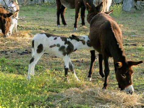 Burro Cojiendo Pony | burro cojiendo pony mujeres folladas por pony mujeres