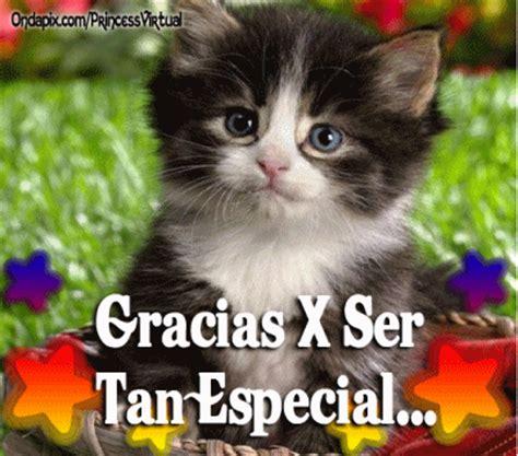 imagenes lindas de amistad gif im 225 genes bonitas de gatitos con mensajes