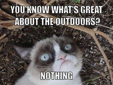 Katzen Meme - das k 246 nnte meine katze sein kotzendes einhorn