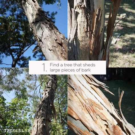 Why Do Sycamore Trees Shed Their Bark by Bark Painting Craft With Watercolor Paint Tinkerlab