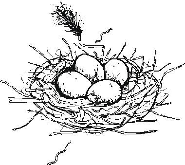 coloring page nest bird egg nest colouring pages