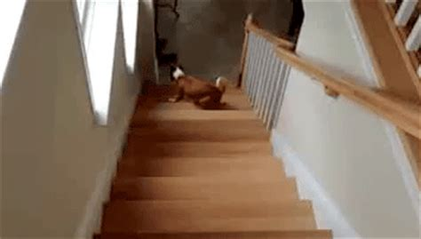pug stairs gif climb stairs backwards gif giantgag