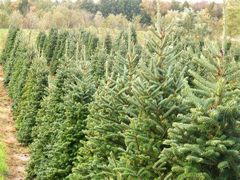 Wholesale Trees - wholesale trees minnesota bulk trees for sale mn tree