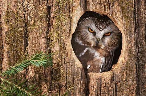 owl tree do not disturb 1funny