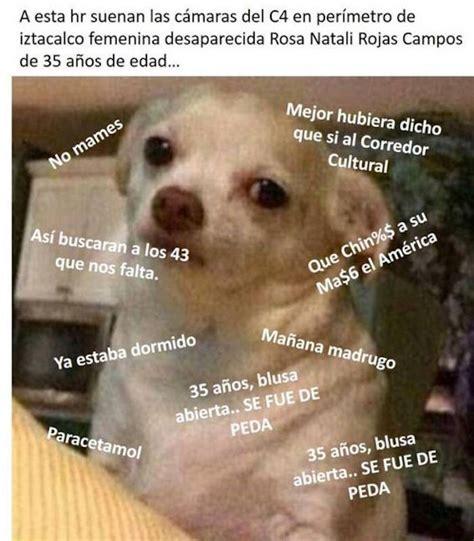 Memes De Chihuahua - el 2015 en 15 memes fugas ilusiones 243 pticas y obvio