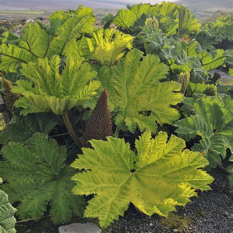 plants that grow in tropical climates the best tropical plants to grow in a cooler climate