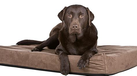 best dog bed for labs our favorite big dog beds perfect for labs and other
