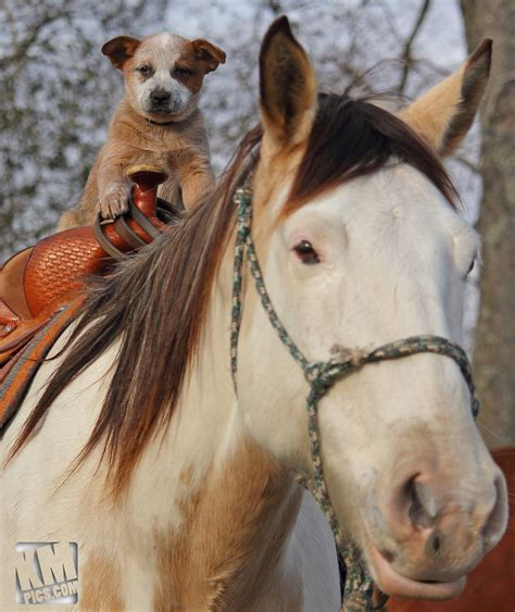 puppies and horses puppies and horses 1 by kurtywompus on deviantart