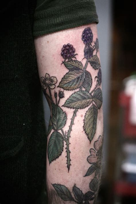 botanical illustration tattoo best 25 blackberry ideas on vintage