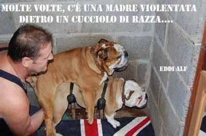 In Cagna by L Ultima Follia Animalista Le Cagne Quot Violentate Quot Ti