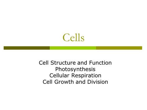 cell structure and function section 7 1 life is cellular cells cell structure and function photosynthesis cellular