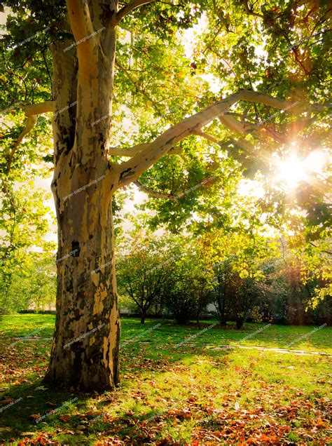 tree background hd photos paper backgrounds autumn tree background