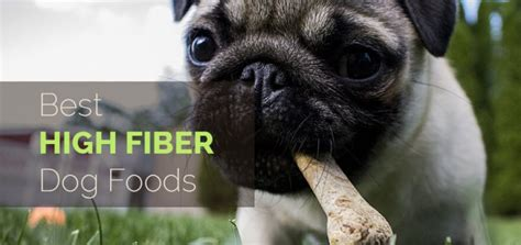 high fiber puppy food your woof a dedicated to