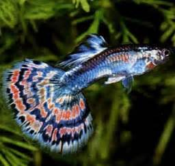 Tropical aquarium fish offer united kingdom bradford