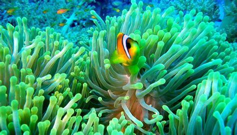 imagenes de animales naturales quedaras encantado con estos paisajes naturales con