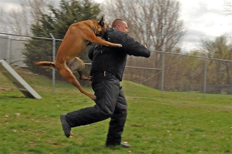personal protection dogs personal protection tips tricks and special techniques