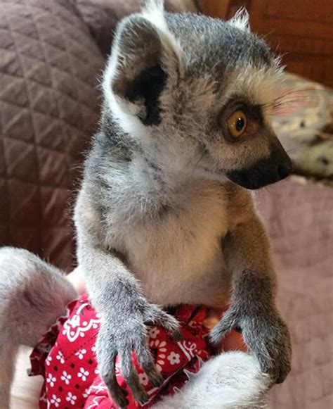 texas exotic animals breeders  unusual pets
