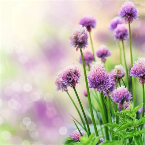 beautiful flower pictures hd pictures of beautiful flowers 03 free stock photos in