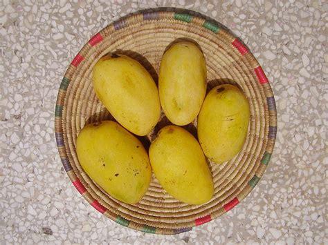 siege mango chaunsa
