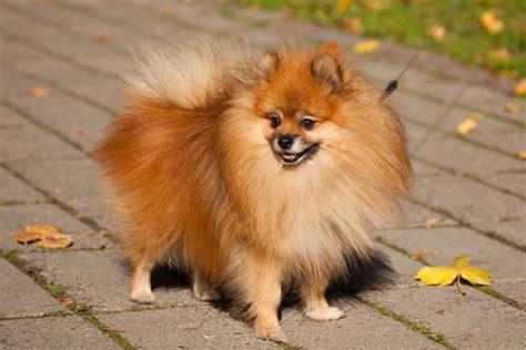 clostridium in dogs diarrhea due to clostridium perfringens in dogs symptoms causes diagnosis