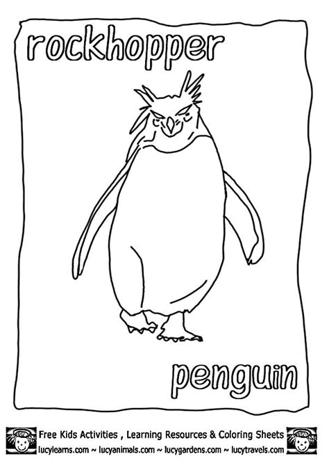 macaroni penguin coloring page 17 best images about penguin on pinterest penguin