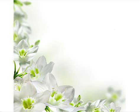 fiori profumati bianchi fiori bianchi profumatissimi idea creativa della casa e