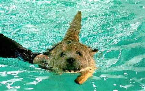 merja larivaara hs uitettu koira on tyytyv 228 inen koira lemmikki kaleva fi