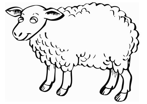 coloring page sheep sheep outline coloring page coloring home