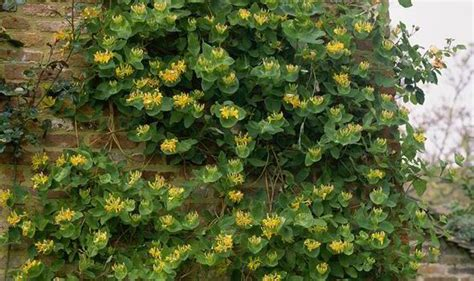 Interior With Plants How To Propagate Wall Climbers In Spring Such As Ivy And
