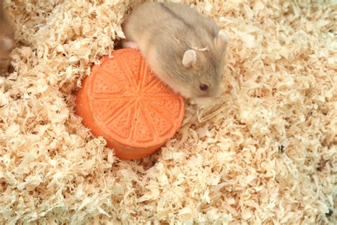 best hamster bedding how to make hamster food water and bedding choices 10 steps