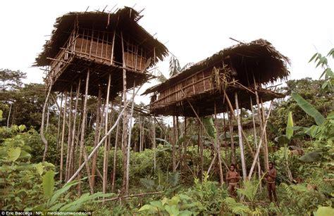 korowai tree houses the korowai tribe who live in tree houses in indonesia