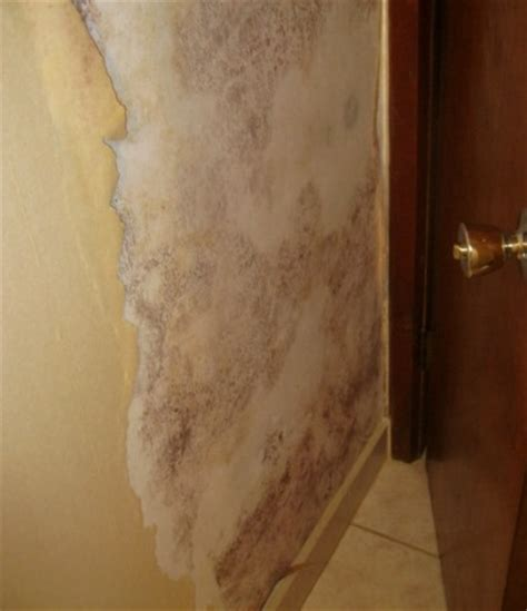 wallpaper black mould do it yourself mold remediation personal safety