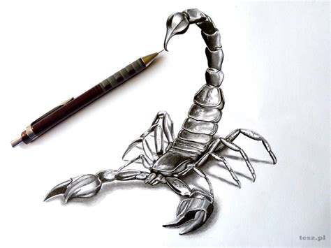 Carpet Art by How To Draw A Scorpion Tribal Tattoo Design Style