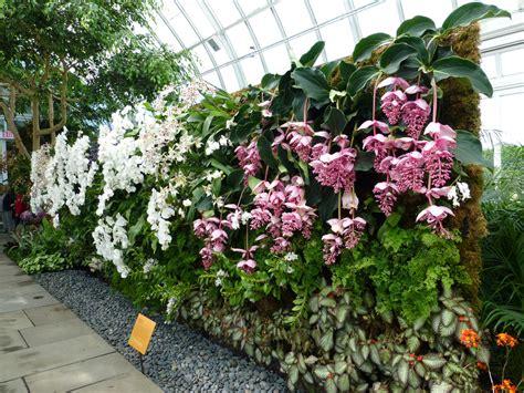 botanical garden orchid show